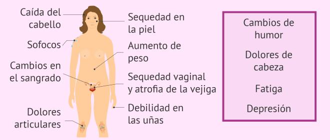 sexualidad en la menopausia cambios climaterio
