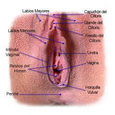 vulva real
